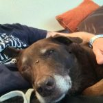 Leigh L, English Homestay teacher photo of pet dog, Biscuit